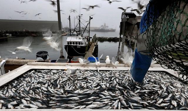 Достигнуто международное соглашение о ловле рыбы в Арктике.