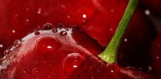 Интенсивный черешневый сад — рентабельность 2000%
