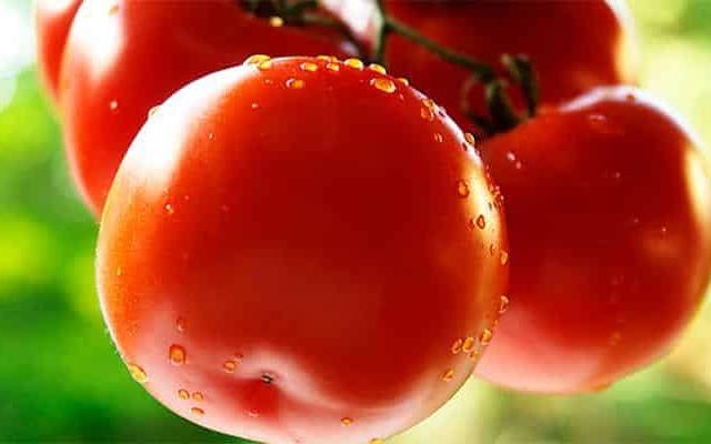 Как правильно выращивать томаты