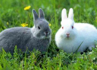 Какой травой кормить кроликов