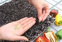 Перец - посев семян на рассаду