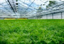 Зелень круглый год — и полезно и прибыльно