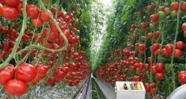 Инвестиции в растениеводство приносят свои плоды