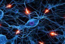 Прикладное использование нейронных сетей. Нейросети в сельском хозяйстве.