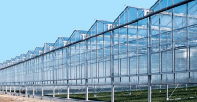 Производство овощей закрытого грунта в приоритете