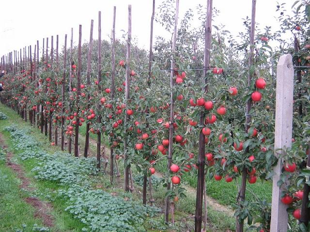 В Ставропольском крае садоводы получили первые гранты