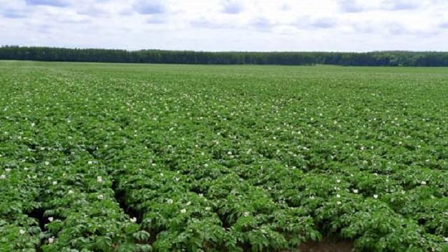 Стратегия-2030: урожай картофеля вырастет на 8%, масличных — в 1,5 раза