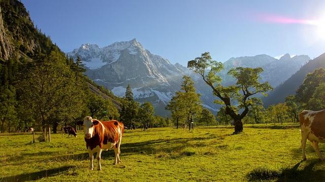 Экологически чистое молоко из Осетии