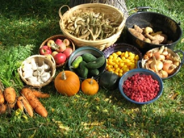 Органическому земледелию нужны квалифицированные кадры