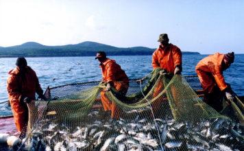 Основная проблема рыбной отрасли – сырьевая направленность