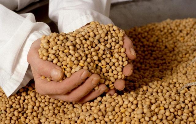Первый в ЮФО соевый завод построят в Адыгее