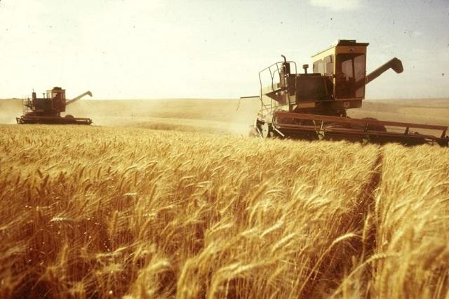 Развитие АПК Сибири — как реализовать зерновой потенциал региона