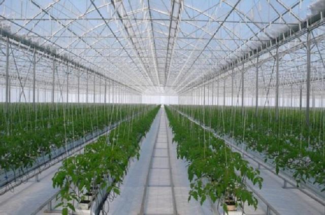 Уникальный для региона тепличный комплекс планируется создать на Камчатке
