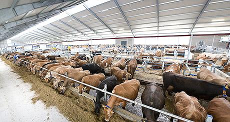В Красноярском крае построят два крупных животноводческих комплекса
