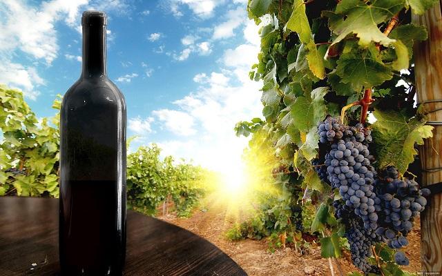 Виноделие Крыма стало приносить государству в 2,5 раза больше дохода