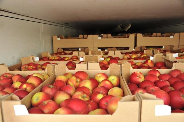 Чьи яблоки продает Турция России