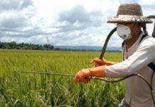 Действенность пестицидов снижается. Ученые США просят у правительства финансовой поддержки.