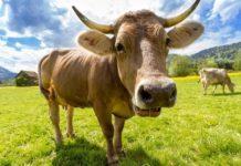 Для сельхозпроизводителей могут ввести патенты