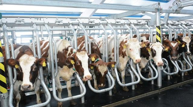 «ЭкоНива» и TH True Milk построят молочные фермы в Подмосковье