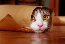 Как найти кота в шаурме