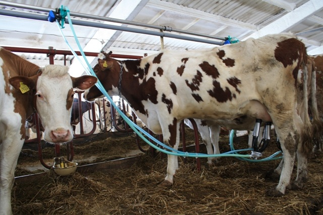Молоко: реалии и перспективы отрасли