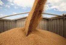 Первая опытная партия зерна отправилась в четырех контейнерах из Самарской области в Санкт-Петербург