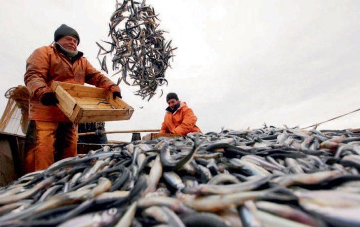 Похоже, рыбная отрасль становится одной из приоритетных для правительства России