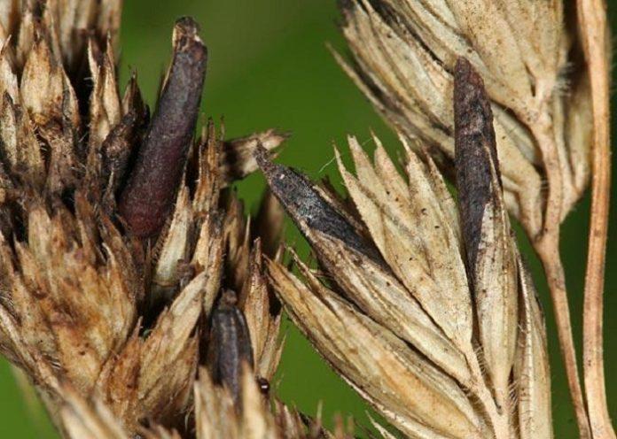 Проблемы с российским зерном_ в Египте задержана партия пшеницы