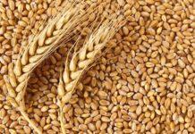 Санкции против Ирана могут серьезно ударить по зерновому экспорту РФ
