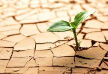 В Крыму окажут адресную помощь пострадавшим от засухи аграриям