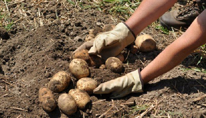 В овощной отрасли назрел скандал