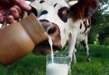Агрофирмы холдинга АГРОСИЛА вышли на рекордный валовый надой молока