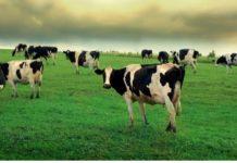 ФАС доказала ценовой сговор на молочном рынке Алтайского края