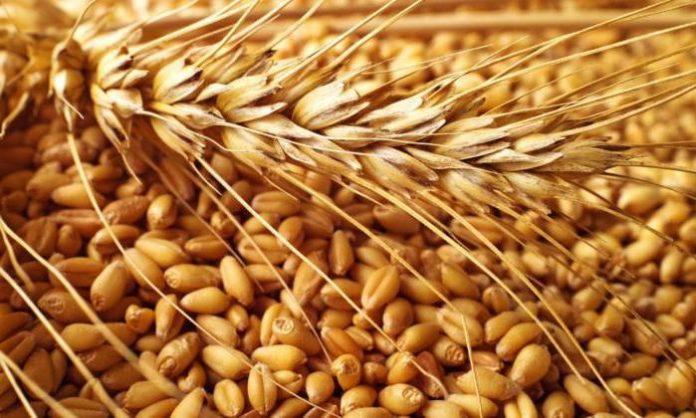 Иркутское зерно поехало в Монголию