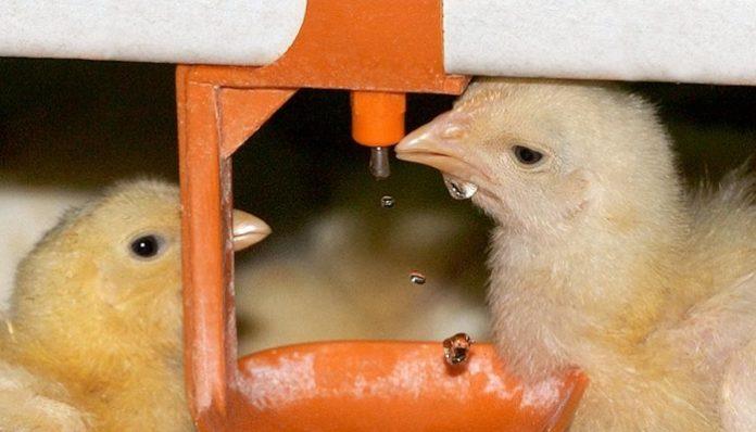 Казахстан ограничил ввоз продукции 36 российских птицефабрик