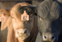 МЭР не поддержало законопроект Минсельхоза об обязательной маркировке животных
