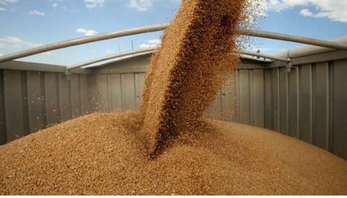 Минсельхоз намерен сократить до пяти число регионов, получающих субсидии на перевозку зерна