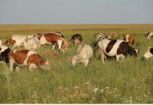 Почти 160 млн руб. планируется выделить в рамках грантовой поддержки семейных ферм в Подмосковье в 2018 году