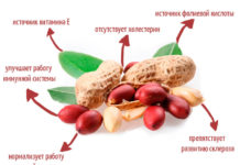 Свойства арахиса: вред и польза