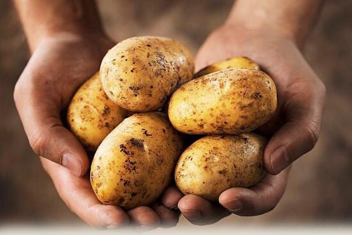 Про картофельный сектор