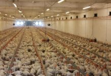 Птицефабрики яйца по миру пустили