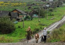 Путин поручил провести Wi-Fi в села с населением от 100 человек