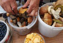 Россиянам позволят собирать ягоды и грибы для продажи