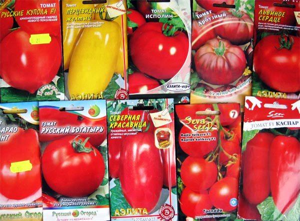 Сорта и виды помидоров, подходящие для теплицы