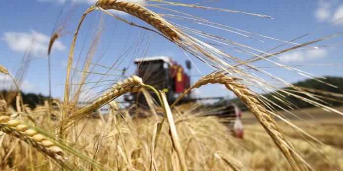 Так все-таки, сколько зерна нам ждать в этом сезоне?