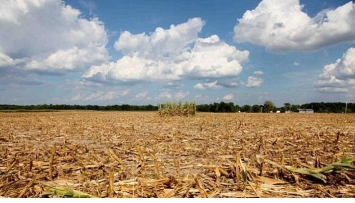 В Беларуси из-за засухи погибло 2% посевов