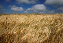 В Новосибирской области впервые за шесть лет снизится объем сельхозпродукции