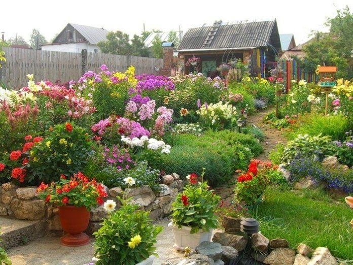 Виды многолетних первоцветов - Лучшие многолетние цветы для дачи