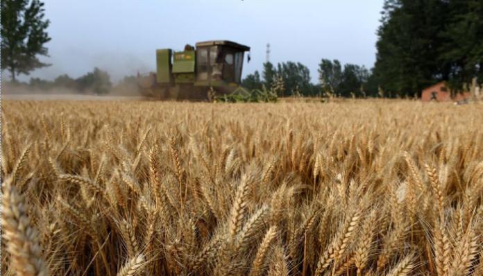 За 4 дня до конца сезона экспорт российской пшеницы превысил 40 млн. тонн
