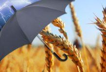 Госдума РФ 21 июня рассмотрит проект изменений в закон об агростраховании